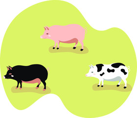 Pigs vector isolated illustration n white background. Concept for print, web design, cards, logo, icon