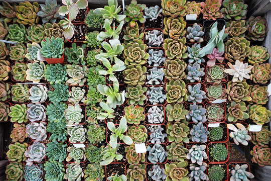 Neatly organized succulents on a table