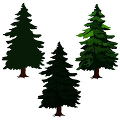 fir trees, drawing pictures, green fir trees
