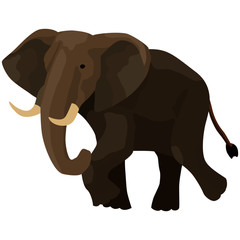 image of elephant, wild animal, isolate on white background