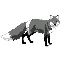 fox image, monochrome picture, isolate on a white background