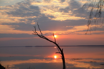 Dead tree in the water against the sunset.The sun is above the horizon and the illuminated sky with clouds mirrored on the smooth surface of the lake.A great end to the day.Exclusive picture of nature