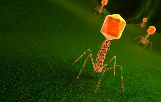 Bacteriophage virus particle on bacteria surface