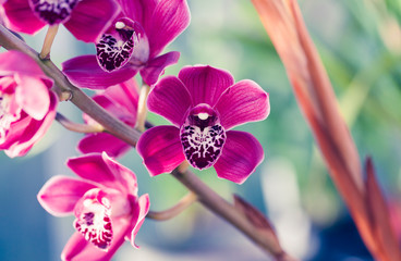Printed roller blinds Macro photography Phalaenopsis orchid macro