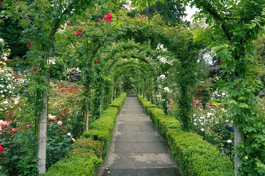 A path through the rose garden at Butchart Gardens