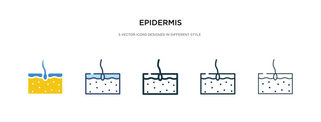 epidermis icon in different style vector illustration. two colored and black epidermis vector icons designed in filled, outline, line and stroke style can be used for web, mobile, ui