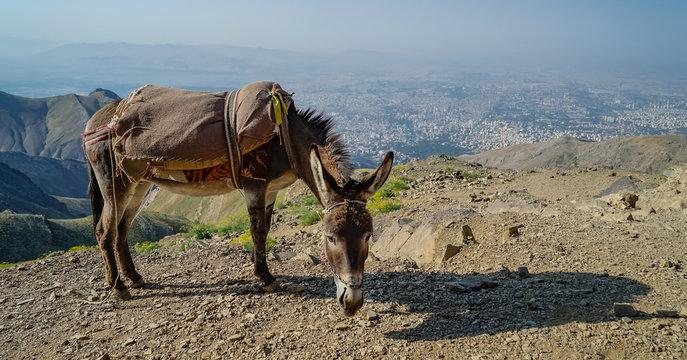 Esel über Teheran, Iran
