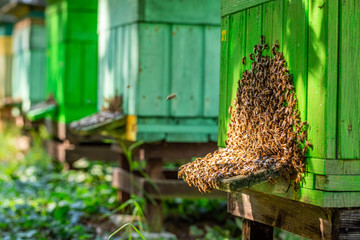 Old apiary with bees, summer in countryside