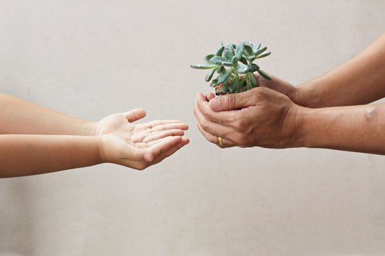 the father gives plant in hands to his son for the next generations concept - save the environment background