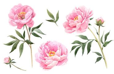 Obraz Watercolor peony flowers illustration - fototapety do salonu