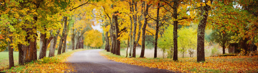asphalt road with beautiful trees in autumn Fototapete