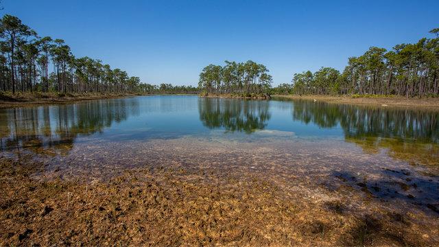 Long Pine Key Lake landscape, Everglades national park