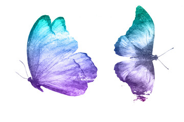 two watercolor butterflies isolated on a white background