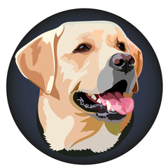 Muzzle Labrador Retriever Vector Illustration