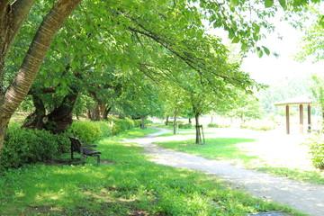 公園 Fotobehang