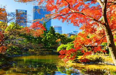 Aluminium Prints Autumn Landscape of Japanese autumn color tree and leaves and pond water in winter Japan