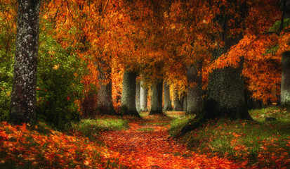 Türaufkleber Grau Verkehrs autumn path