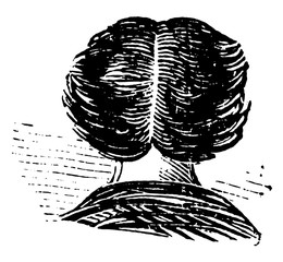 An illustration of a centered hair, vintage engraving.