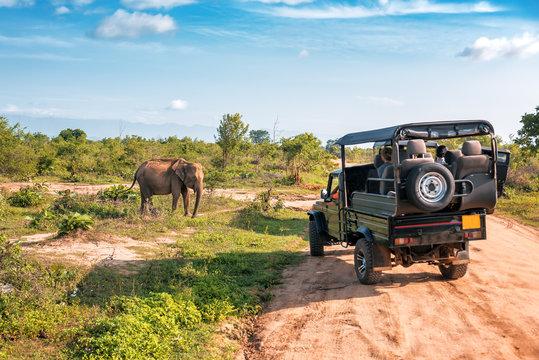 live elephant on safari