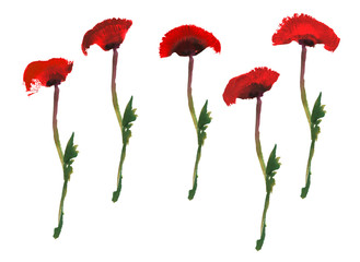 Set of red poppy flower on a green stem. Watercolor and gouache drawing isolated on white background