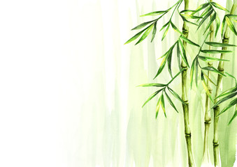Green bamboo background, Asian rainforest. Watercolor hand drawn  isolated illustration