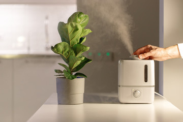 Hand turn on air humidifier on the table at home, water steam direction to a houseplant - Ficus lyrata. Ultrasonic technology, comfortable living conditions, moisture increase in the apartment.