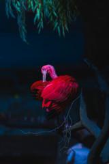 Fotobehang Flamingo pink flamingos in the water