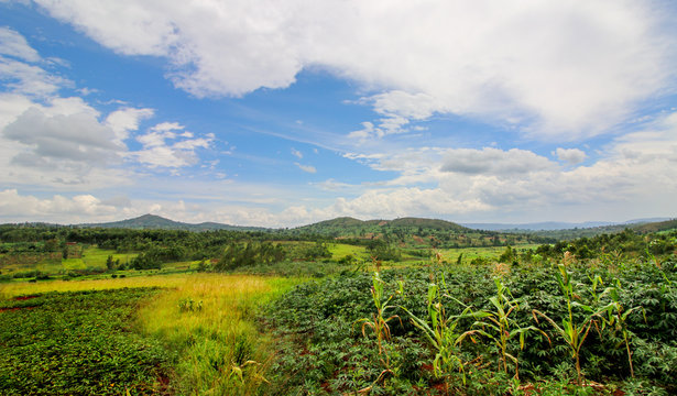Panoramic overview of the rural Gitega Province in Burundi with agricultural fields until the Horizon. Cassava, millet and corn are the most common crops