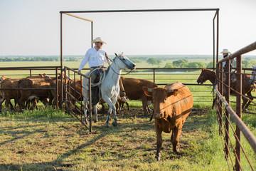 Cowboy at work Wall mural