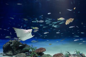 水族館の水槽で泳ぐエイと魚のイメージ