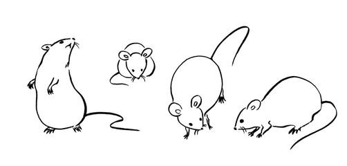 ねずみの線画1