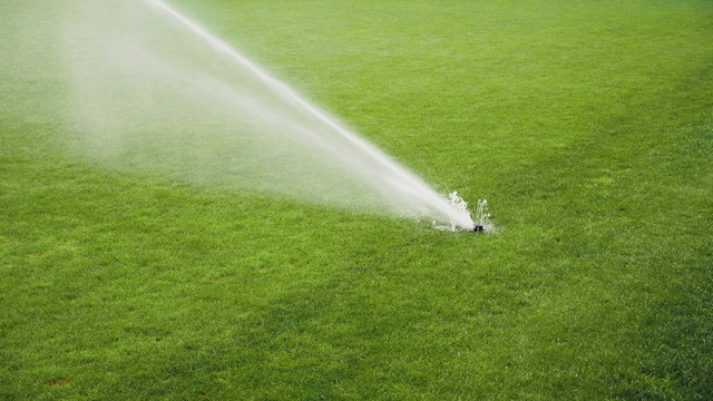 Automatic system working on the fresh green grass on football or soccer stadium. Sprinklers spraying water on the grass