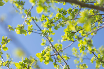 Green leaves on a background of blue sky