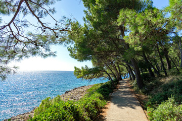 Cikat forest park beach walkway with trees and the blue sea