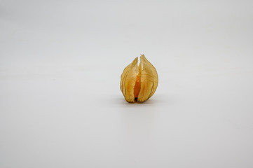 one only physalis (physalis, golden, gooseberry) isolated on white background