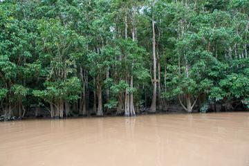 Safari en el río Kinabatangan