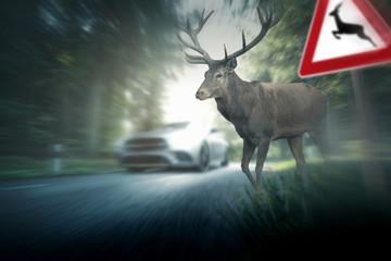 Türaufkleber Hirsch Wildunfall - Hirsch - Straßenverkehr