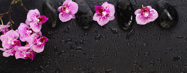 Beautiful floral background with copy space. Pink orchid flowers with wet zen black stones