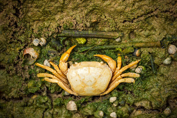 Crab dead on the mud. Closeup and copy space. The impact of the use of chemicals in agriculture.