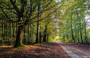 Waldweg im Herbst / Path through forest in autumn