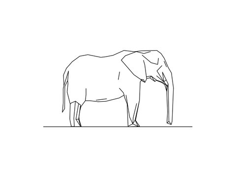 Vector illustration of a wild elephant isolated on white background