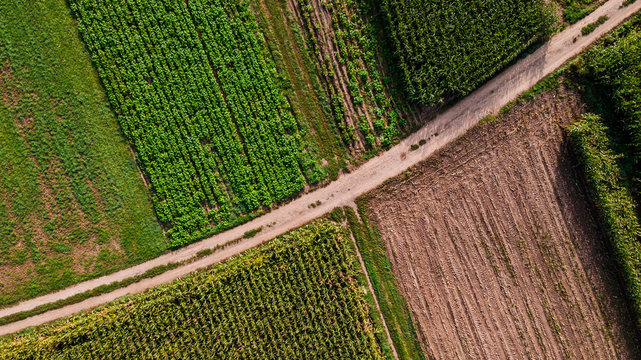 Countryside Road Between Farmland Fields. Aerial Drone Top Down View