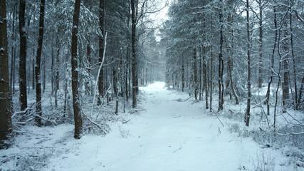 Schnee im Wald im Winter