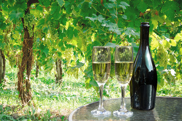Poster Wijngaard prosecco wine bottle and glasses on table in vineyard