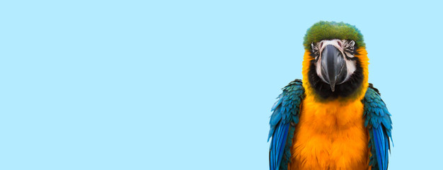 Photo sur Toile Perroquets Blue macaw parrot