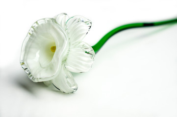Aluminium Prints Narcissus Glass narcissi daffodil flowe close up on white background