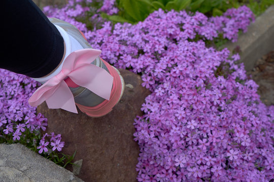 Image of fashionable socks with bows.