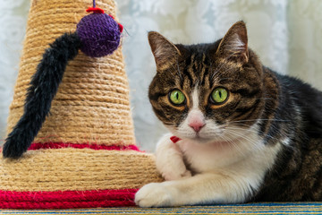 Portrait of an adorable house cat with bright green eyes looking towards the camera while laying down next to a scratching post with a toy mouse.