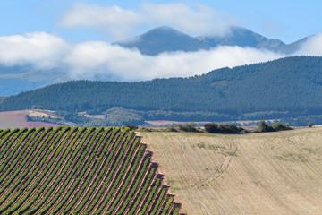 Vineyards with San Lorenzo mountain as background, La Rioja, Spain