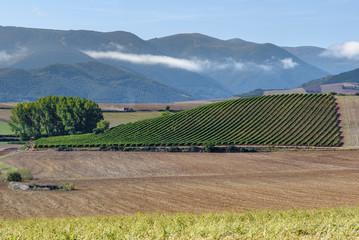 Vineyards with Demanda mountain range as background, La Rioja, Spain